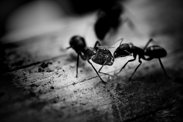 Ant Removal Bristol The Bristol Pest Controller