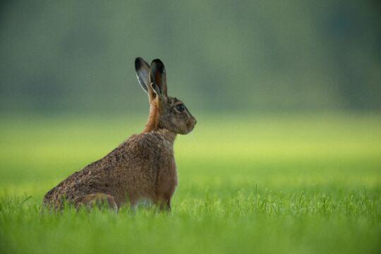 Rabbit Control Bristol The Bristol Pest Controller